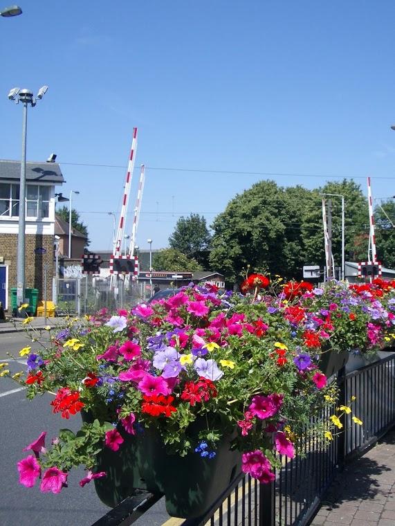 About Highams Park & Village