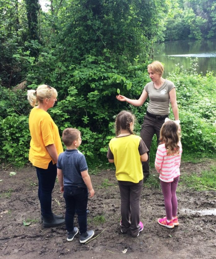 Questionnaire – would you like forestry classes for children in Highams Park?
