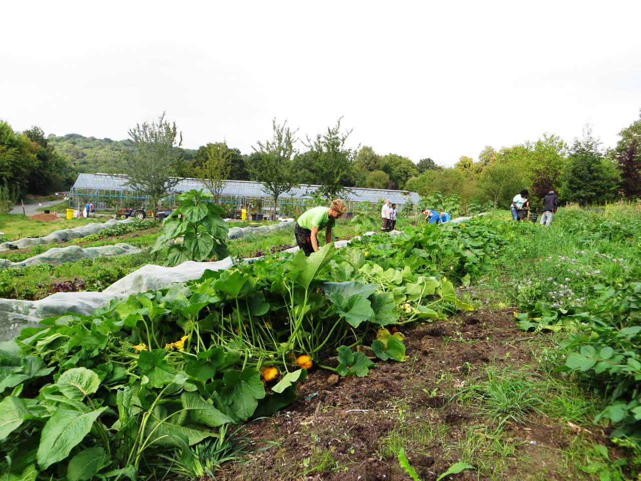 OrganicLea – Free Spring Food Growing Courses